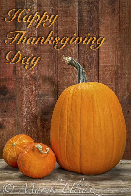 Happy Thanksgiving Day - a greeting card with a pumpkin and hubbard winter squash against rustic barn wood